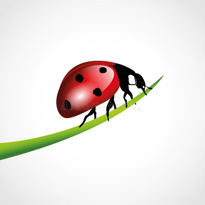 Красный ladybug на травинке изолированной на белизне бесплатная иллюстрация