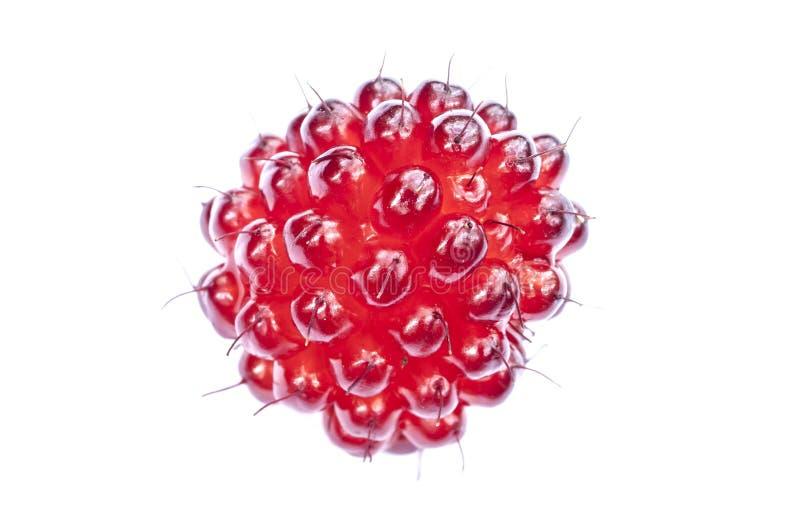 Красный salmonberry стоковые фото