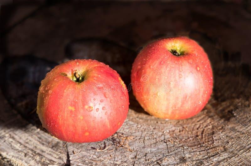 2 красных свежих яблока на стволе дерева стоковое изображение rf