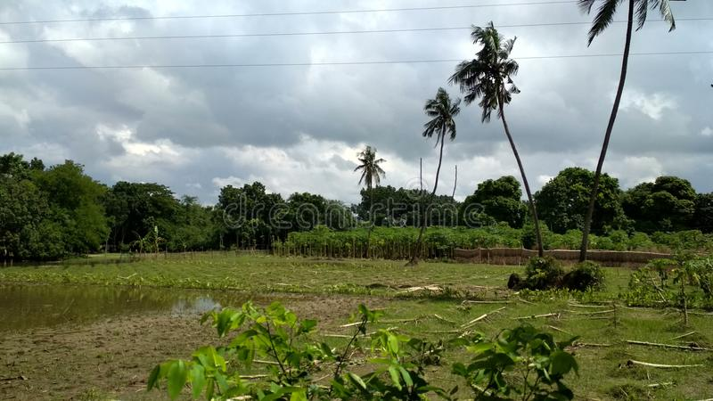 Красота Бенгалии стоковая фотография rf