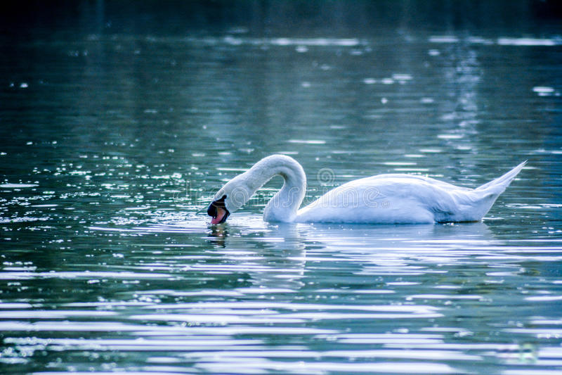 Красота воды стоковое фото rf