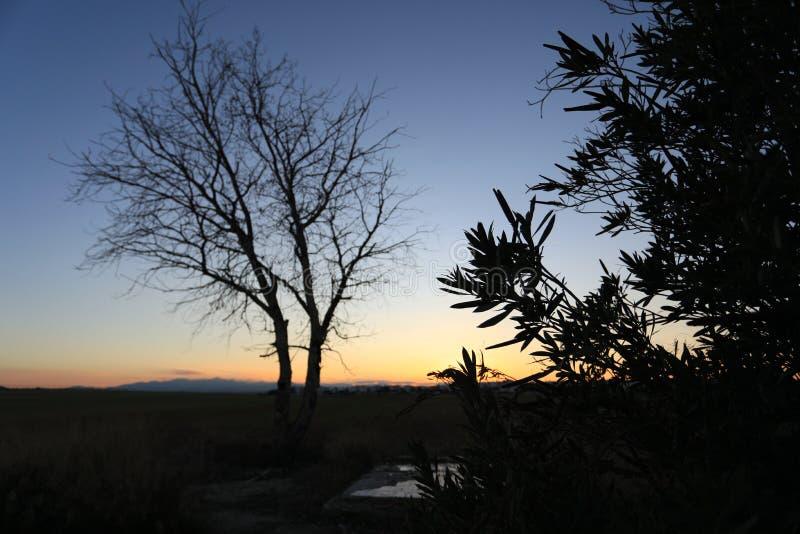 Красота в природе с изумительным деревом стоковое изображение rf