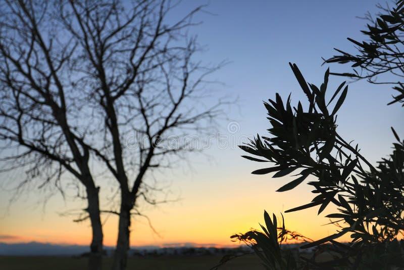 Красота в природе с изумительным деревом стоковое фото