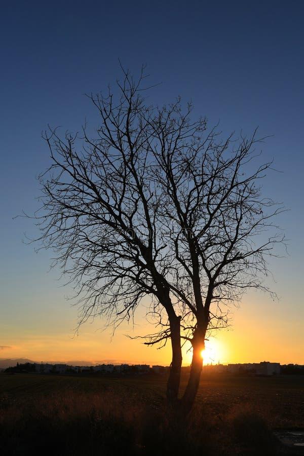 Красота в природе с изумительным деревом стоковые изображения rf