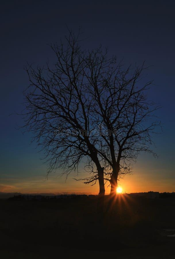Красота в природе с изумительным деревом стоковая фотография