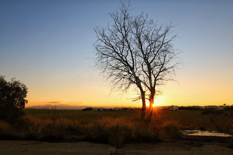 Красота в природе с изумительным деревом стоковые фото