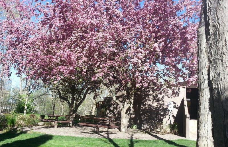 Красота в Boise стоковые фото
