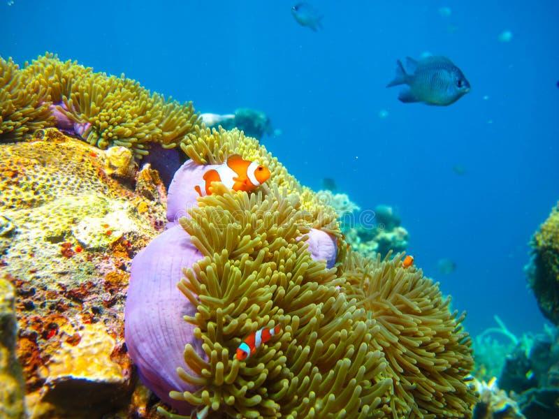 Красота глубокого моря стоковое изображение