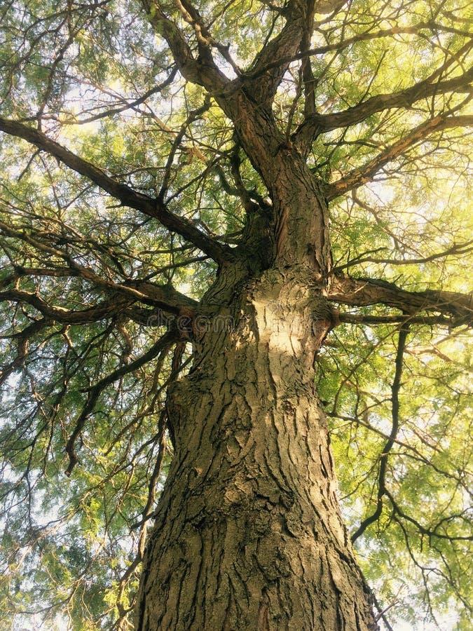 Красота леса стоковое фото rf