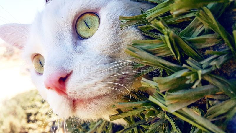 Красота йорданського кота стоковые фотографии rf