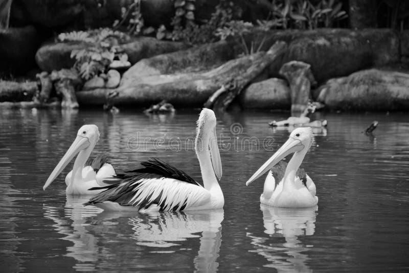 Красота на озере стоковые изображения