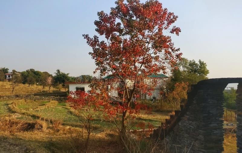Красота осени гималайской деревни сценарные и kangra Индия коттеджа стоковые изображения rf