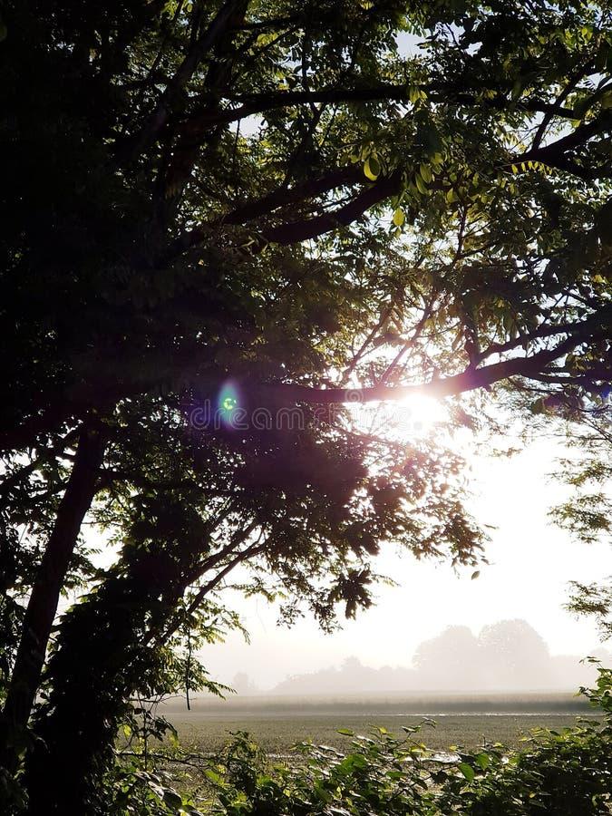 Красота природы в утре стоковая фотография