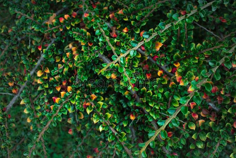 Красота природы дерева красочных листьев небольшая стоковая фотография