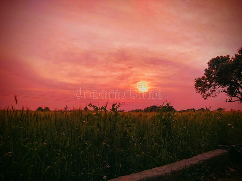 Красота природ стоковое фото rf