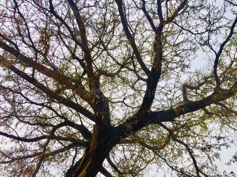 Красота сезона осени и зимы стоковые изображения rf