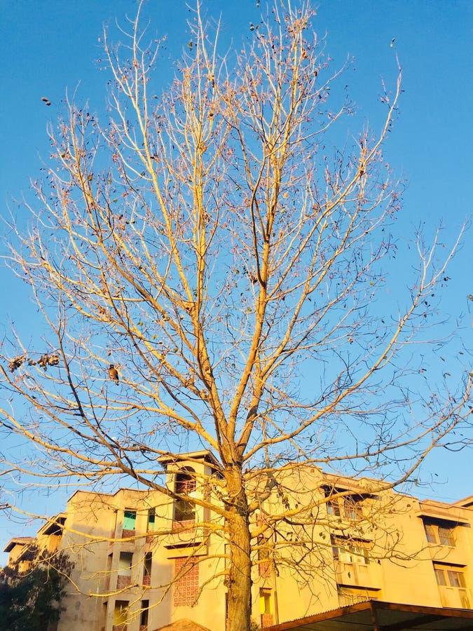 Красота сезона осени и зимы стоковые фотографии rf
