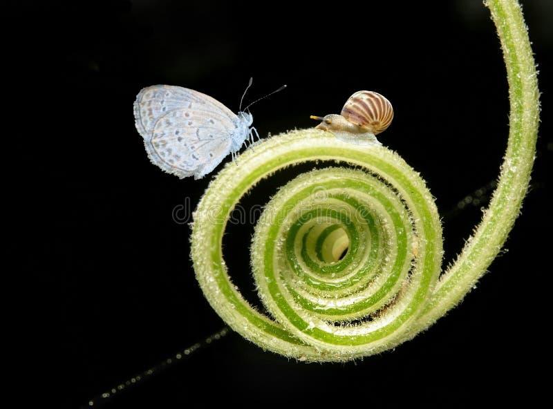 Красота улитки и бабочек стоковое фото