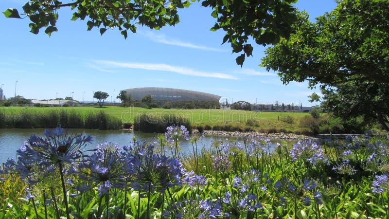 Красота Agapanthus с предпосылкой стадиона стоковая фотография rf