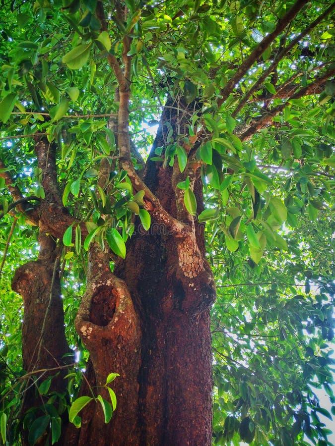 красотка естественная стоковое фото rf