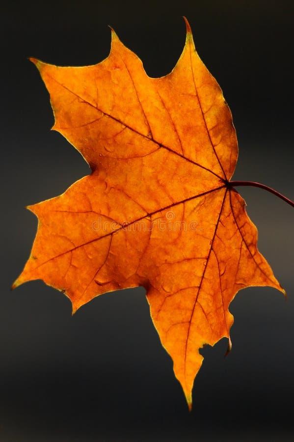 красотка осени Стоковое Фото