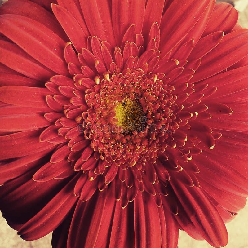 Красотка цветка стоковые фото
