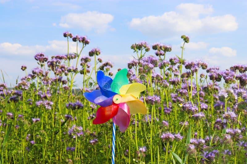 Красочная игрушка pinwheel в зацветая поле стоковая фотография