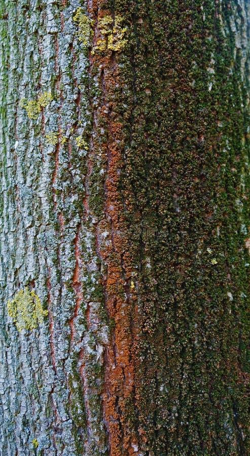 Красочная кора с текстурой мха стоковое изображение rf