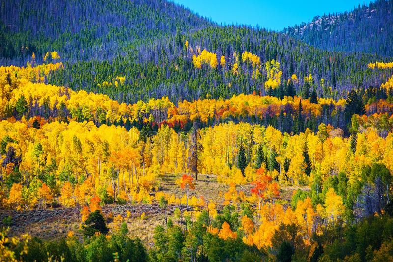 Красочная осень Колорадо стоковые изображения rf
