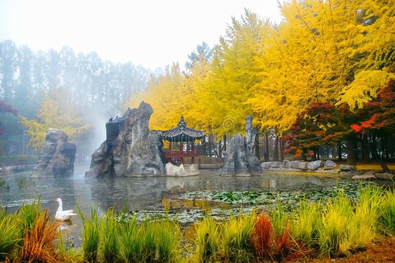 Красочная осень на острове Nami, Южная Корея стоковые фотографии rf