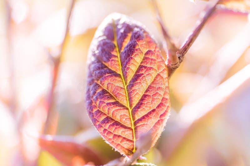 Красочная предпосылка листьев на запачканном bokeh лист растительности летом сада с космосом экземпляра стоковые изображения