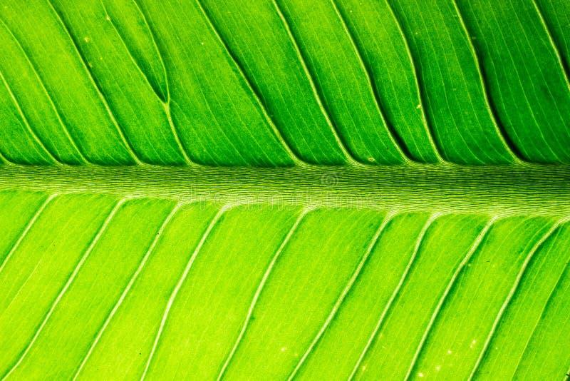 Красочная предпосылка текстуры листьев стоковая фотография rf