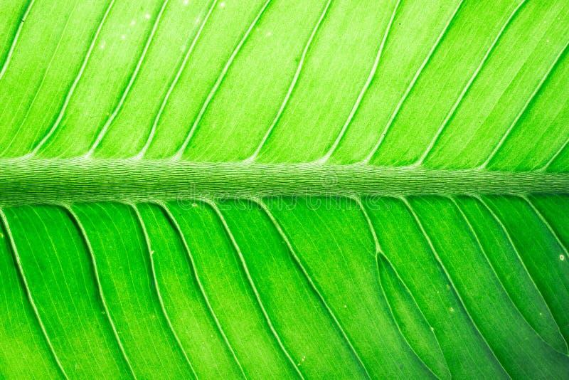 Красочная предпосылка текстуры листьев стоковое фото