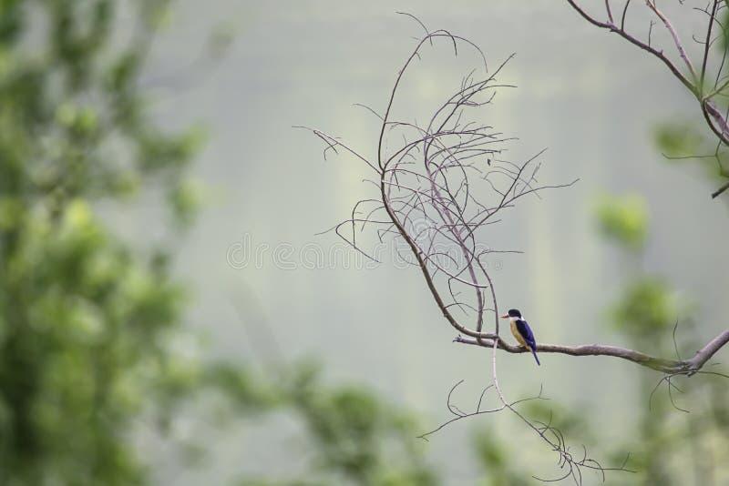 Красочная птица на ветви Деревья предпосылки расплывчатые стоковое изображение rf