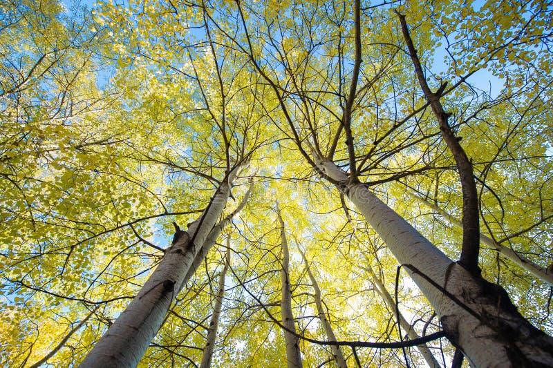 Красочная сень дерева стоковые фотографии rf