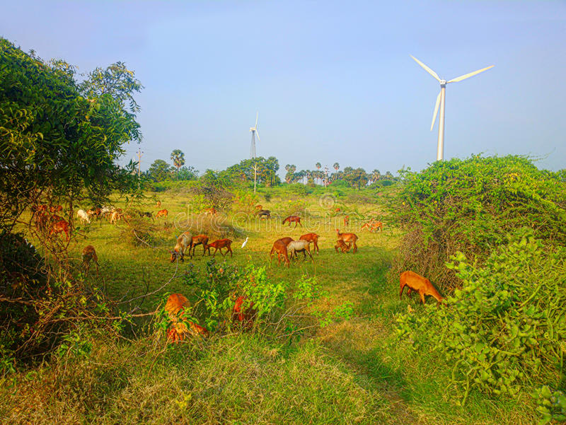 Красочная современная деревенская идиллия пастырская в ветровой электростанции Индии стоковая фотография