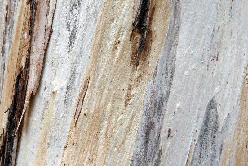 Красочная текстурированная кора дерева стоковая фотография