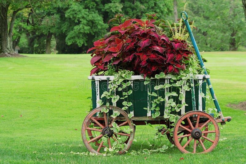 Красочная тележка сада стоковые фотографии rf