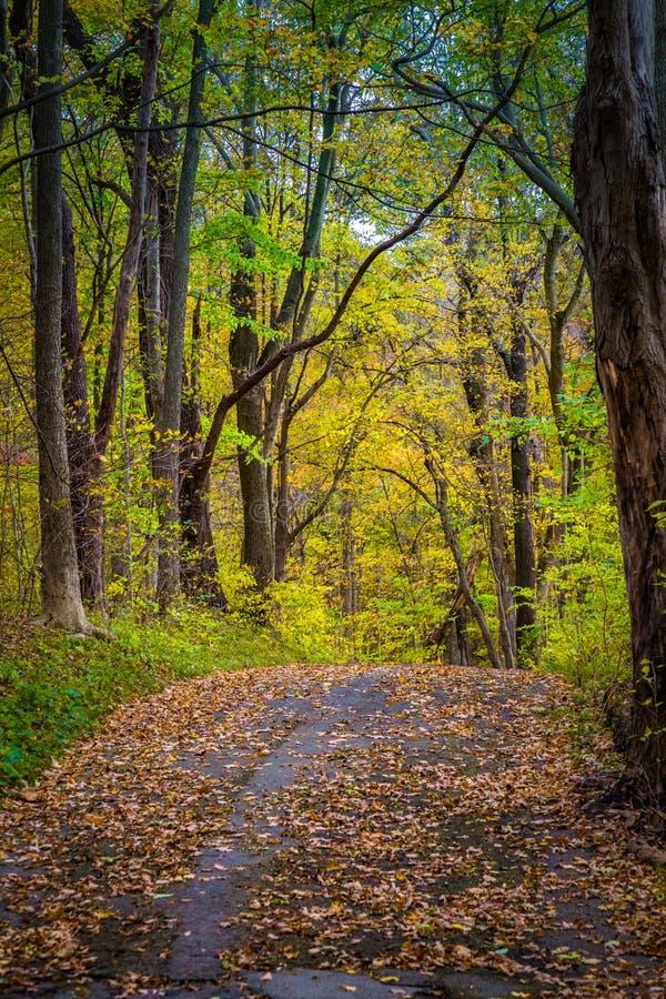 Красочная тропа в парке Lancaster County стоковая фотография rf