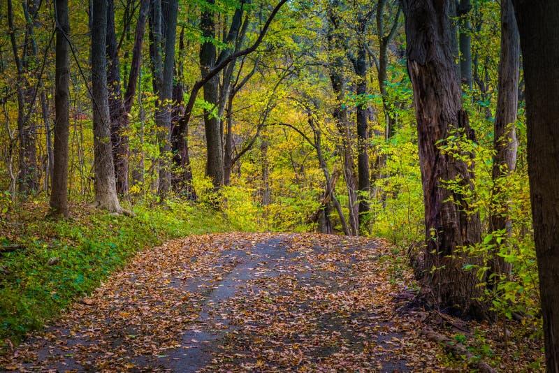 Красочная тропа в Lancaster County Central Park стоковые фотографии rf