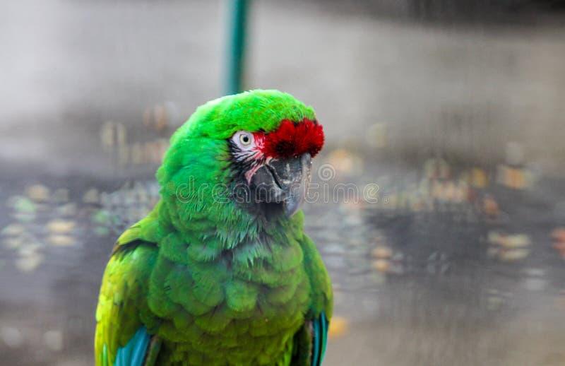 Красочная фауна в Мексике стоковое изображение rf