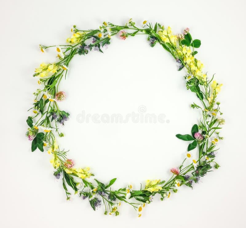 Красочная яркая рамка сделанная из цветков луга Сдирать положение, взгляд сверху стоковое фото