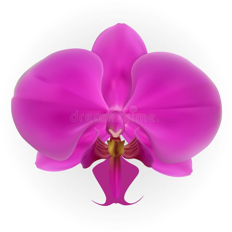Красочная naturalistic орхидея изолированная на белой предпосылке также вектор иллюстрации притяжки corel иллюстрация вектора