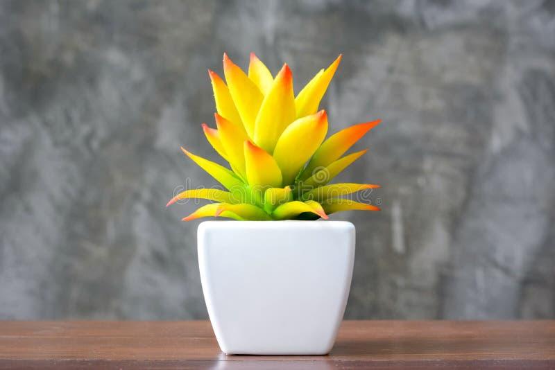 Красочное желтое комнатное растение в белом баке стоковые изображения rf