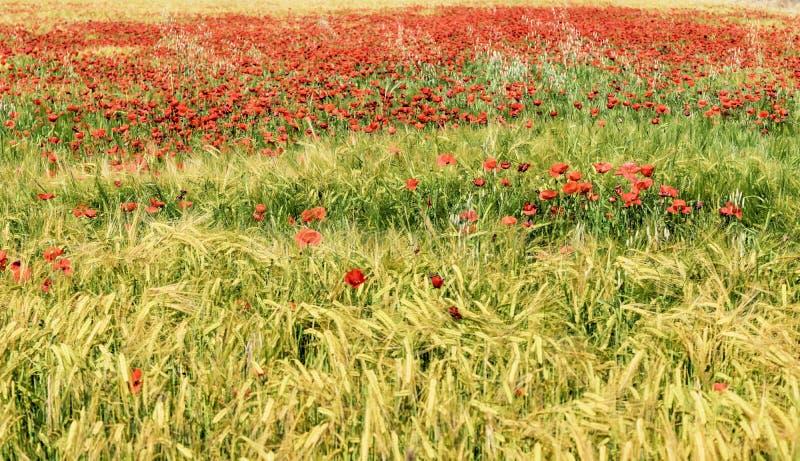 Красочное поле весной стоковое фото