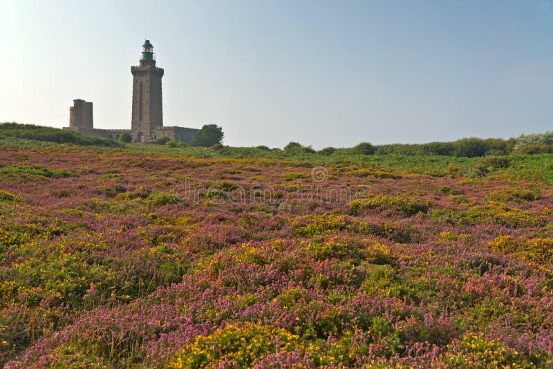 Красочное поле фиолетовых и желтых цветков с маяком на заднем плане Накидка Frehel brittani стоковая фотография rf