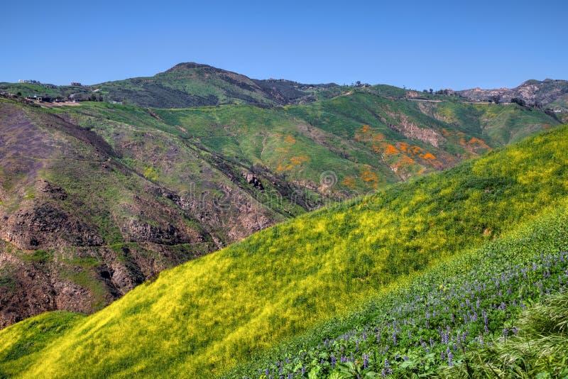 Красочное супер цветене на каньоне загона стоковая фотография rf