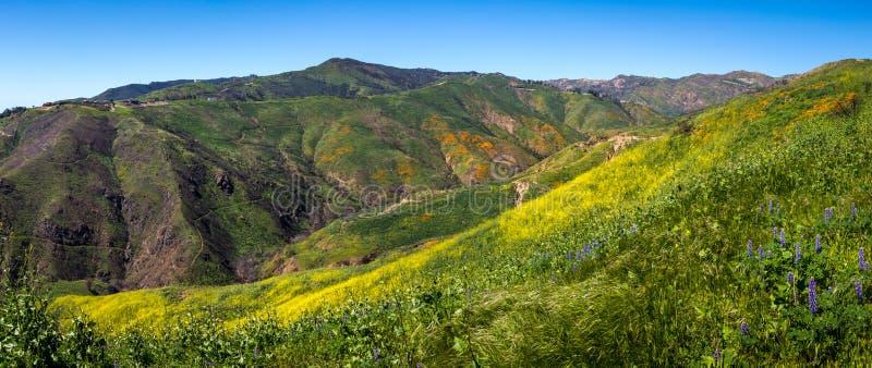 Красочное супер цветене на панораме каньона загона стоковая фотография rf