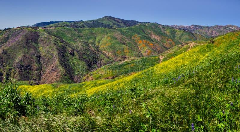 Красочное супер цветене на панораме каньона загона стоковые изображения