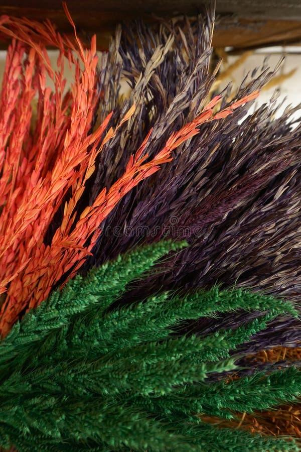 Красочное украшение пшеницы стоковое изображение
